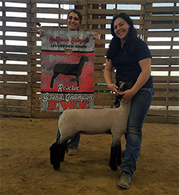 Beam Ranch Club Lambs - Winners